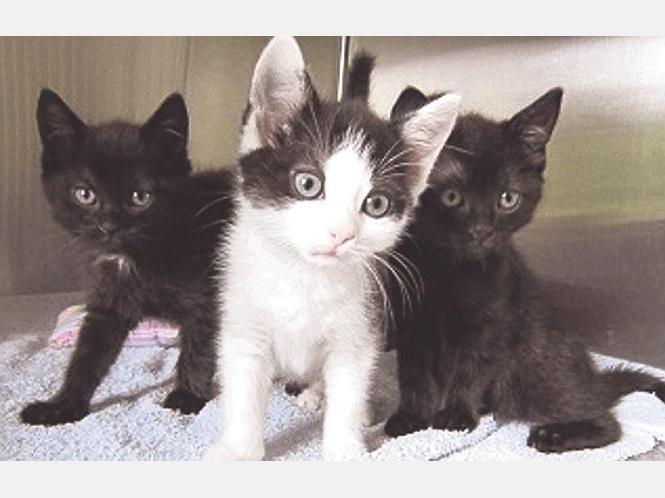Sie leben schon lang im Tierheim: Diese Katzenbabys suchen ein neues Zuhause. Foto:privat/nh