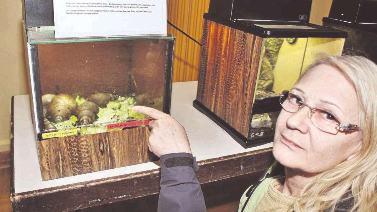 Riesenschnecken: besucherin heike albert hat früher bis zu 15