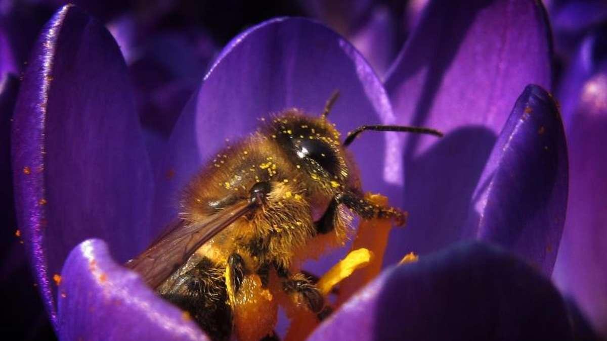 nikotin hnliche wirkung bienen fliegen auf insektizide welt. Black Bedroom Furniture Sets. Home Design Ideas