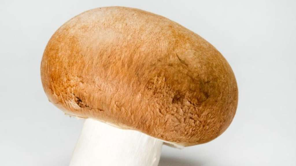 perfektes wintergem se champignons liefern vitamin d gesundheit. Black Bedroom Furniture Sets. Home Design Ideas