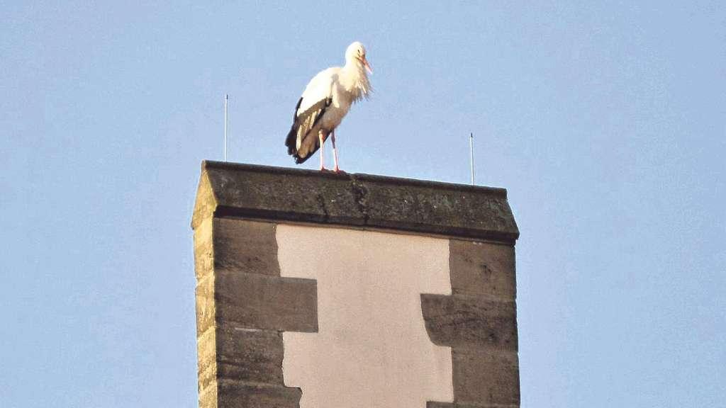 Sonniges Plätzchen: Auf dem Rathaus von Hessisch Lichtenau stehend, hat Martin Kabuth vom Nabu den Storch mit der Kamera dokumentiert. Foto:Kabuth / nh
