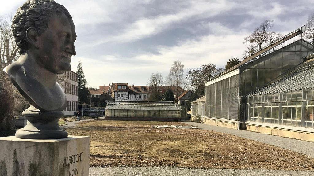 Botanischer Garten: Victoria-Seerose blüht 2016 nicht in Göttingen   Göttingen