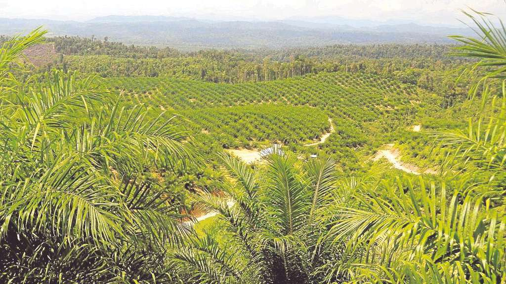 Plantagen Regenwald