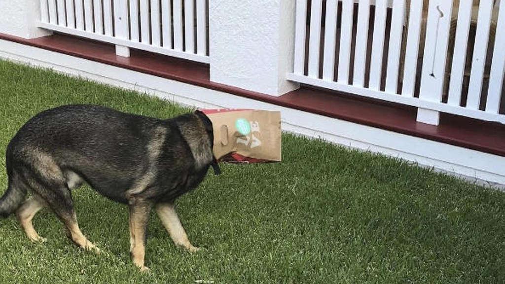 Zu lieb für den Polizeidienst Polizeihund bekommt neuen Job