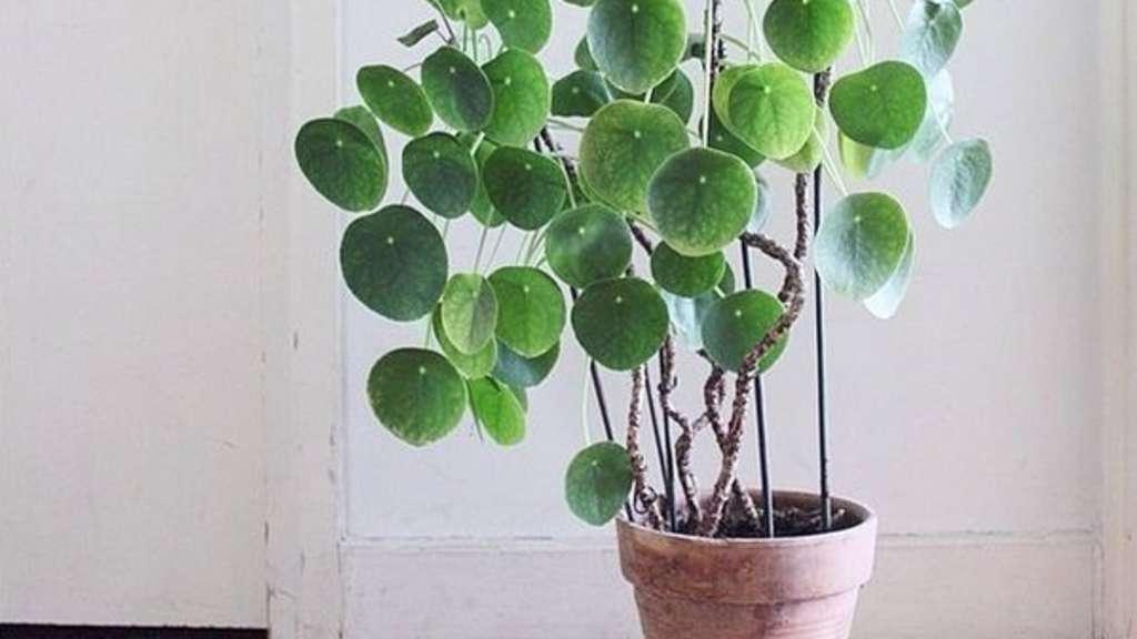 Streusalz ist in vielen kommunen verboten wohnen for Zimmerpflanzen pflegeleicht