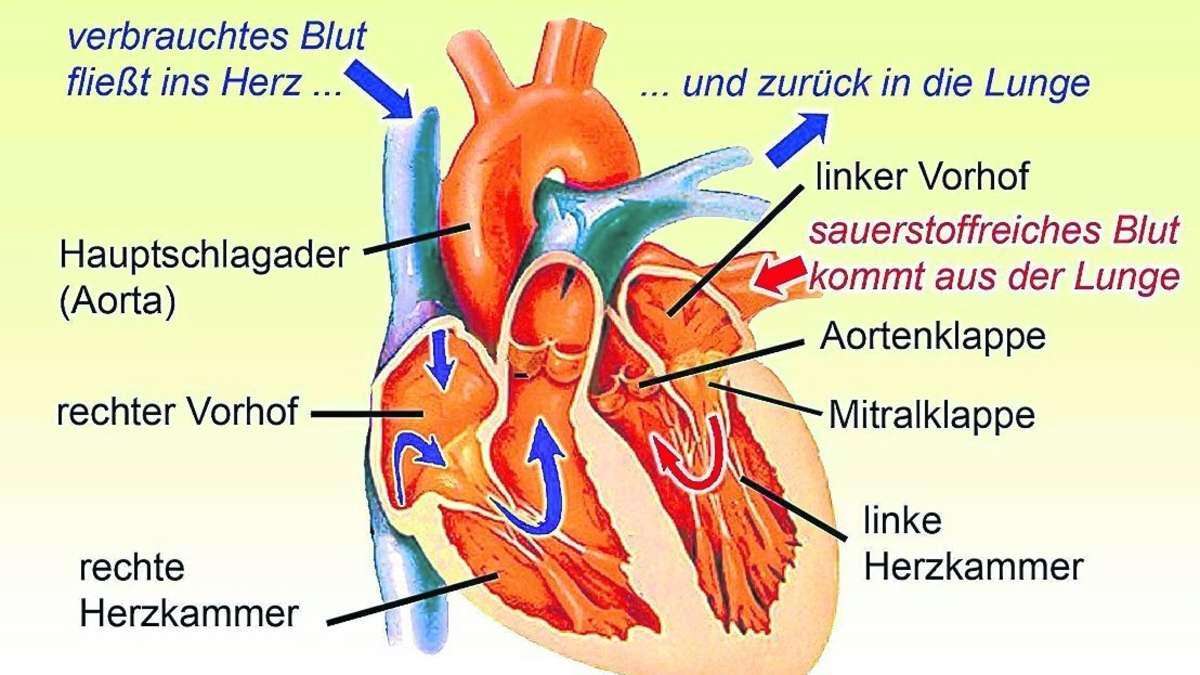 Nett Vorhöfe Des Herzens Fotos - Menschliche Anatomie Bilder ...