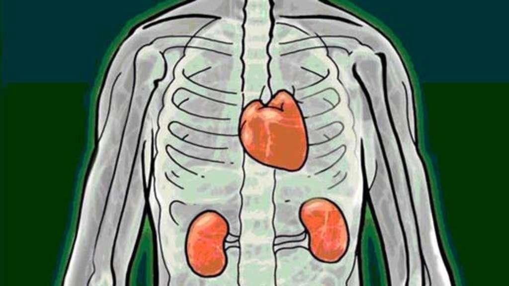 Gesundheit: Herz- und Nierenerkrankungen können zusammenhängen ...