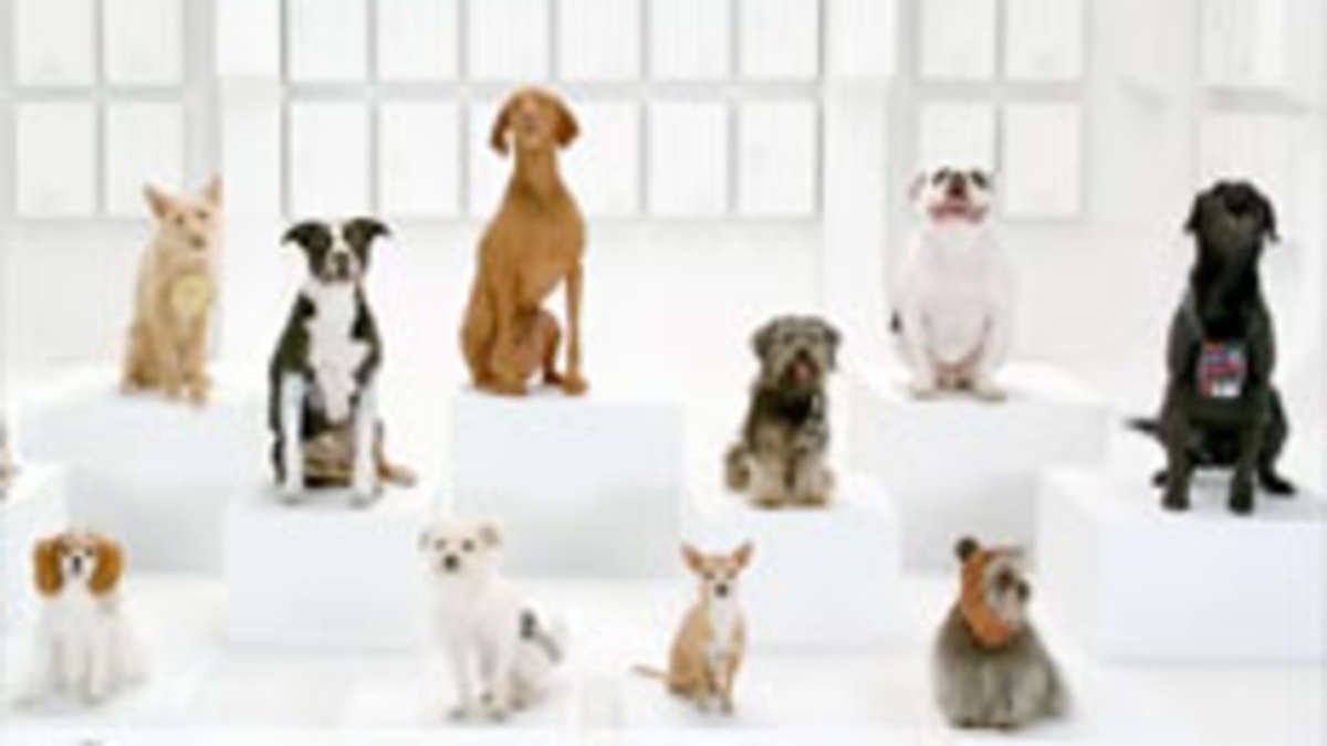 neuer vw spot zum superbowl 2012 jetzt bellen hunde einen. Black Bedroom Furniture Sets. Home Design Ideas