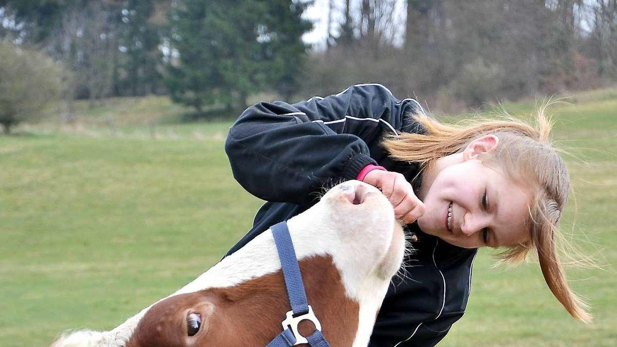 pferd deckt kuh