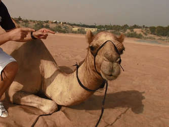 Camel Shaheen World Cup Prediction