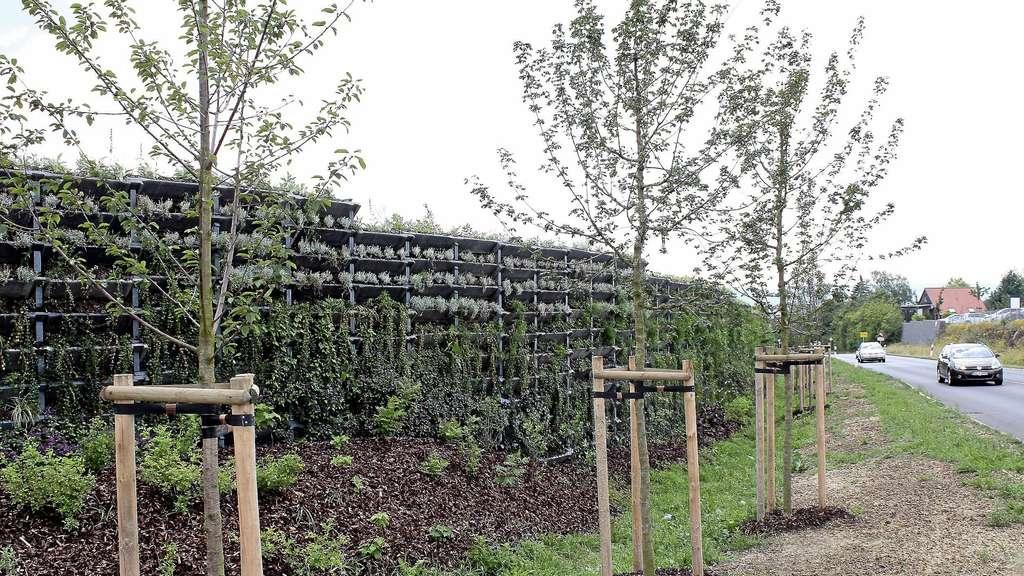 Trotz Bepflanzung Larmschutzwand In Lohfelden Sorgt Fur Unmut
