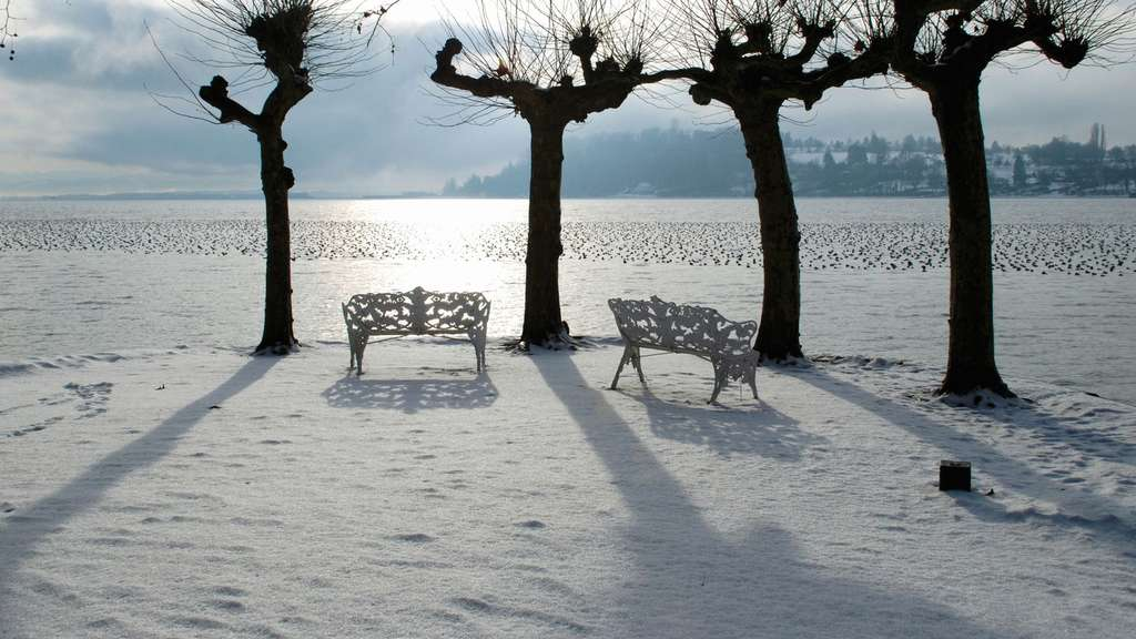 Mainau am Bodensee im Winter