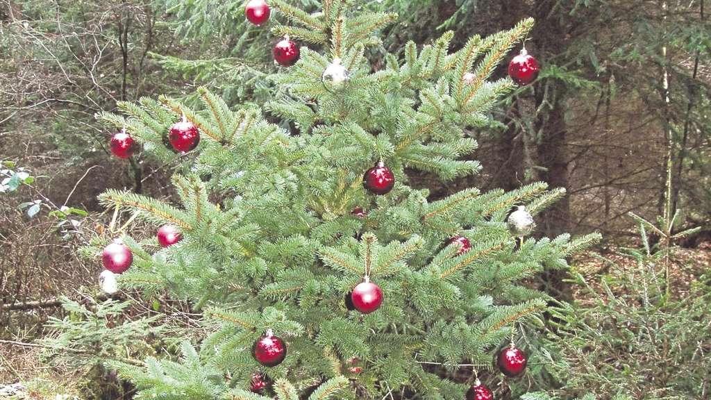 Wer Schmückt Den Weihnachtsbaum.Ernsthausen Wer Schmückt Den Baum Im Wald Burgwald
