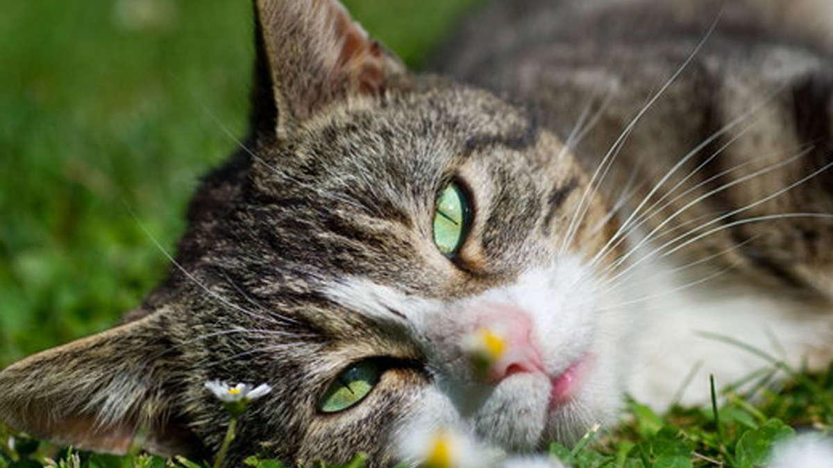 Freundeskreis Katze und Mensch: Willinger gründet Ortsgruppe ...