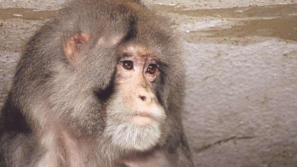 Eine Chance Fur Die Affen Auf Dem Gnadenhof Korbach Waldeck