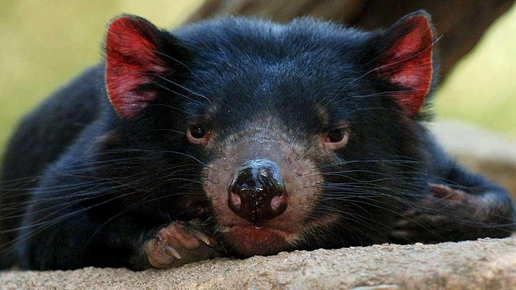 facebd70e7b02e Australien will zwei Millionen Katzen töten