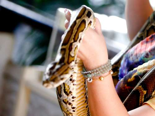 Video: Python beißt Touristin in die Nase