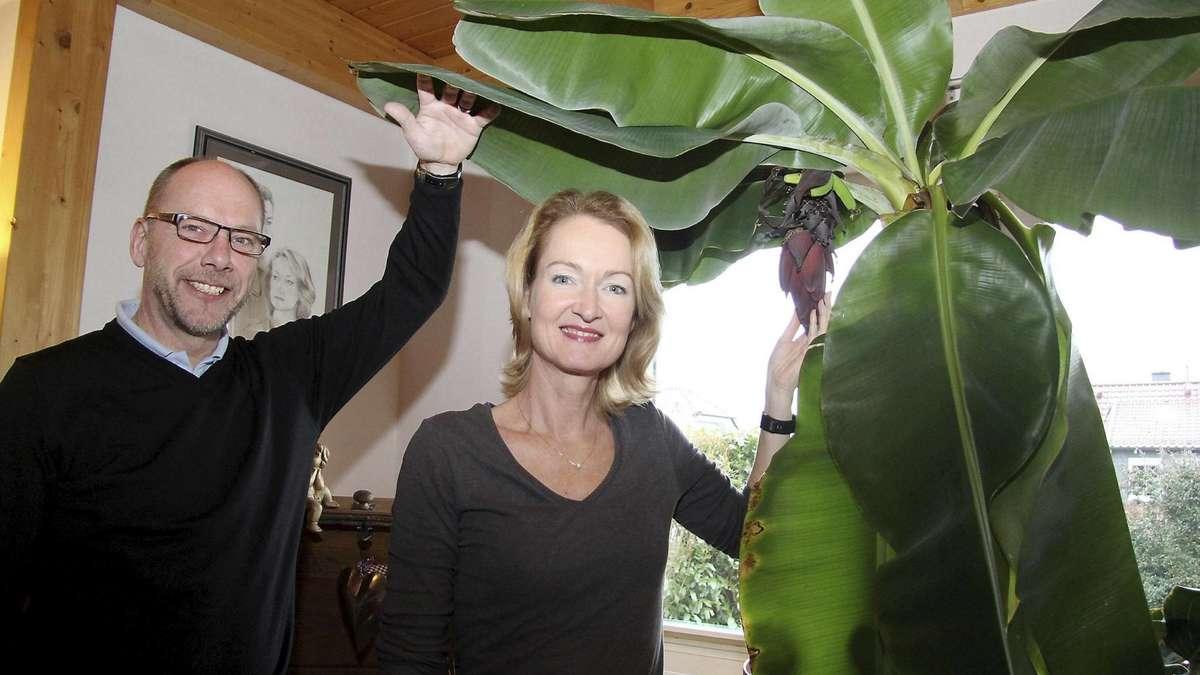 bananen aus burghasungen sie wachsen im wohnzimmer der bartlings zierenberg. Black Bedroom Furniture Sets. Home Design Ideas