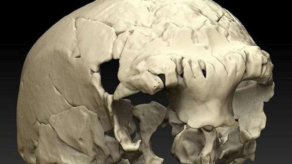 400.000 Jahre alter Menschenschädel in Portugal entdeckt | Welt