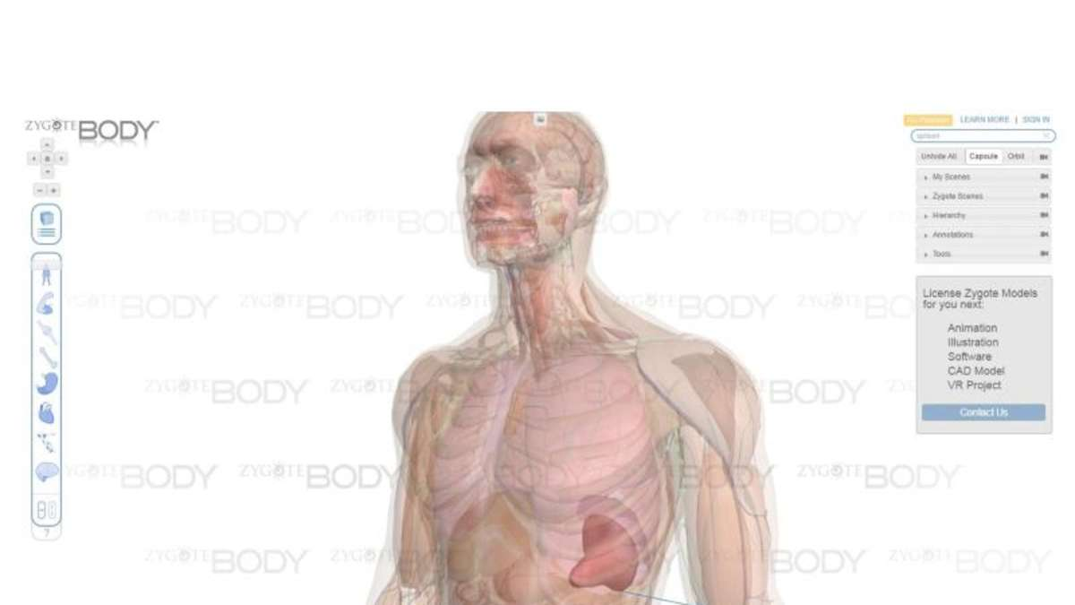 Auf Entdeckungstour durch den Körper | Netzwelt