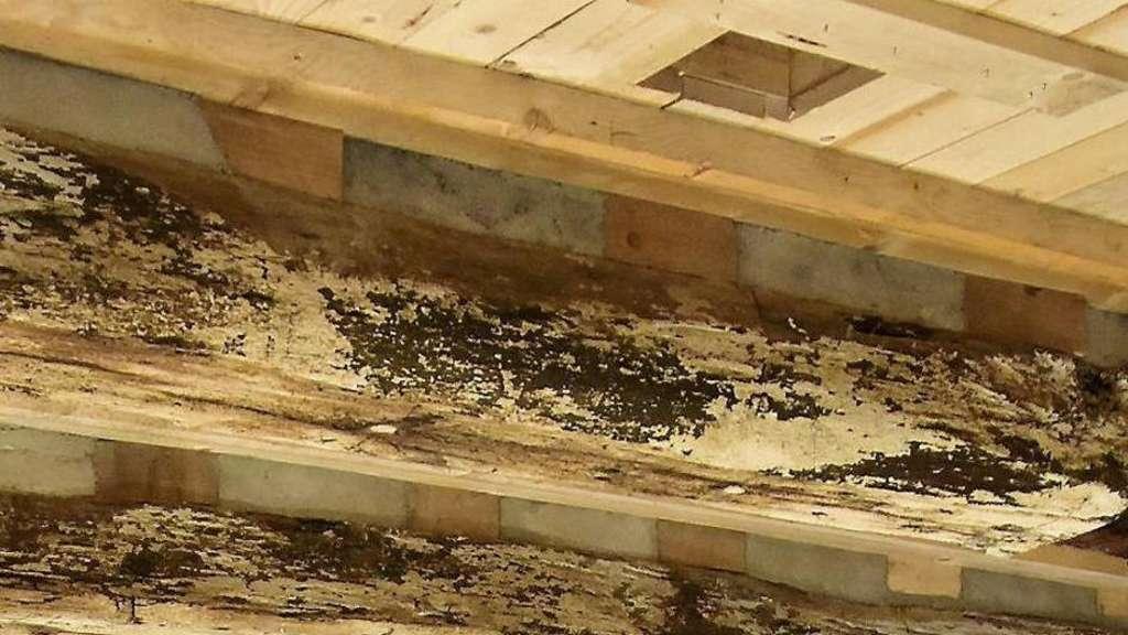 Gewolbekeller Und Plumpsklo Lassen Fachwerk Sanierung In Grebenstein