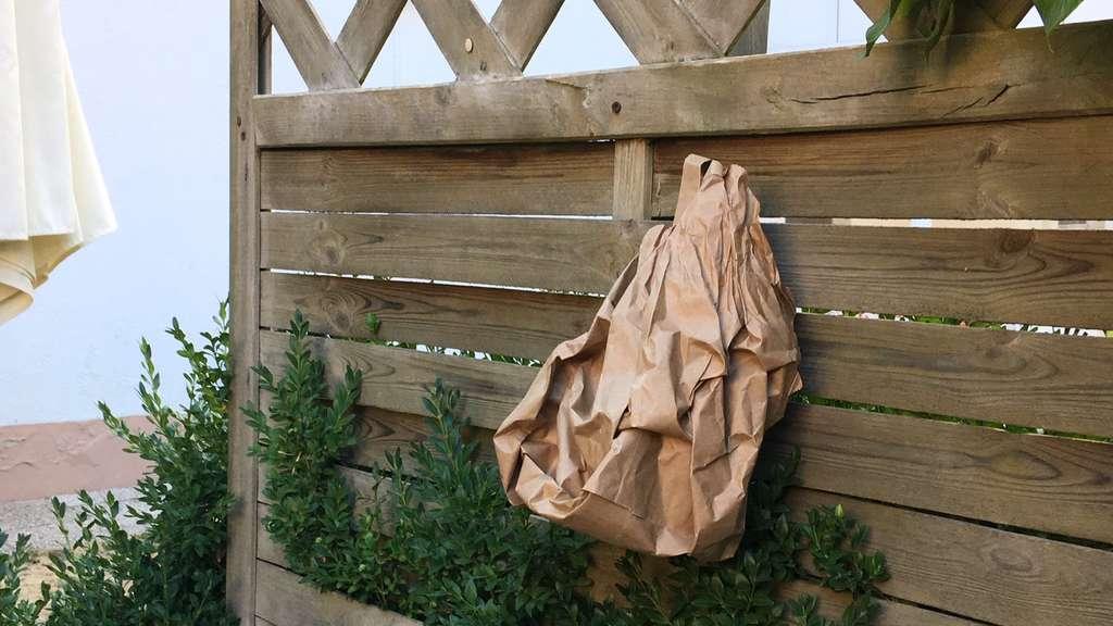 Wespen Vertreiben Strafen Furs Toten Alternativen Zur