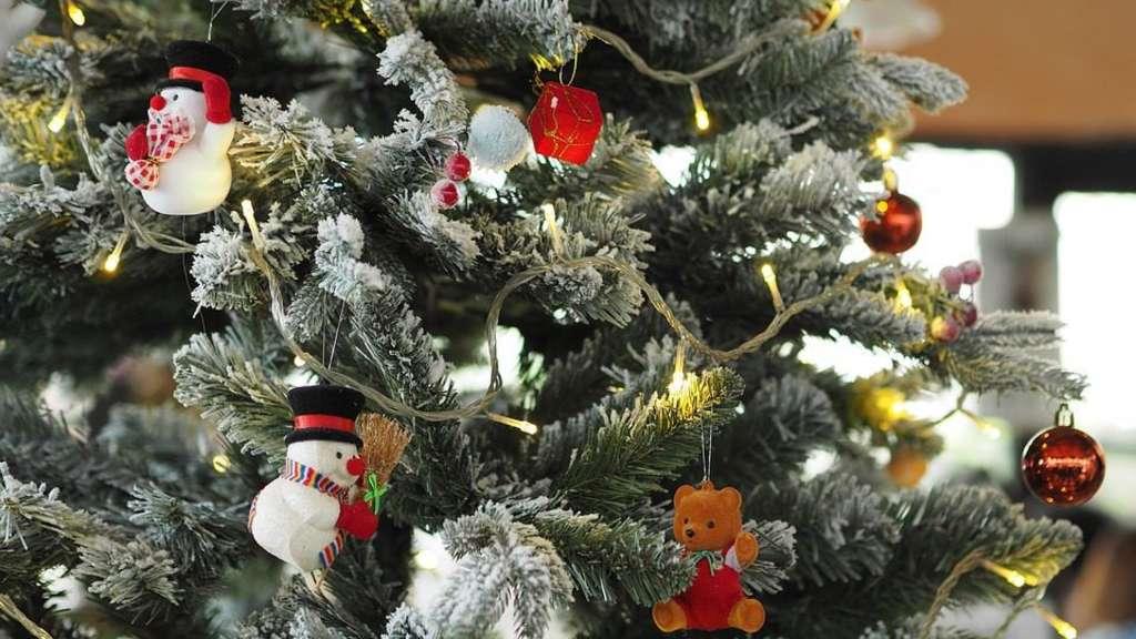 Weihnachtsbaum Tradition.Was Darf Ein Weihnachtsbaum Kosten Kassel