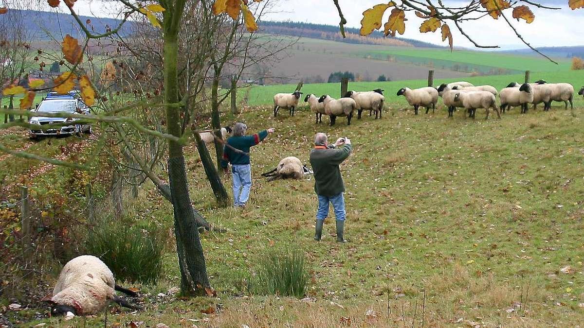 Schafe im Kreis Northeim gerissen: Biss Wolf, Luchs oder Hund zu?
