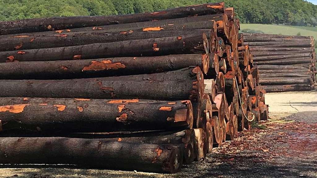 Waldeckische Domanialverwaltung übernimmt Den Holzverkauf Kreis