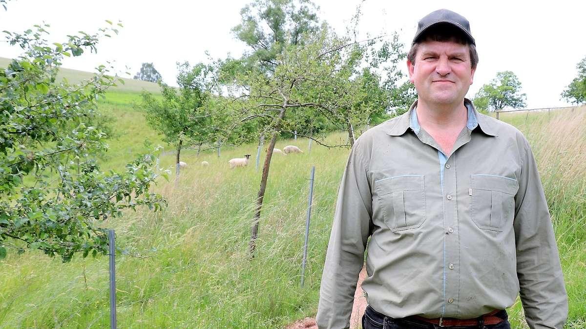 Drei Schafe bei Ronshausen gerissen: Über 120 Kilo Fleisch gefressen