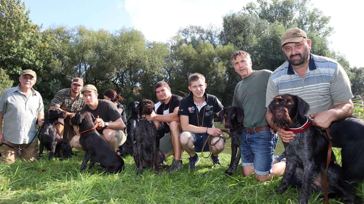 Oedelsheim: Welpen aus dem Superwurf treffen sich zum ersten Mal wieder